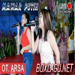 OT. ARSA - MAWAR PUTIH - SECONDONG